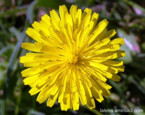 simple groc