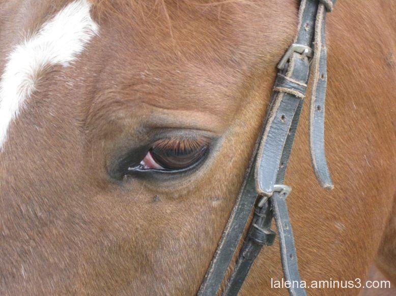 Jo també et miro.
