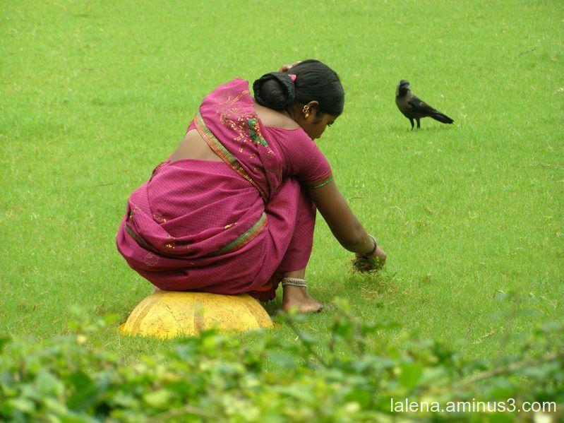 colors de la Índia 9
