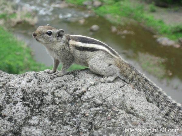 esquirol joganer