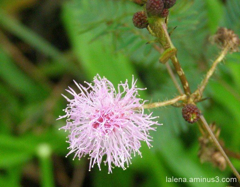 Color floral 6