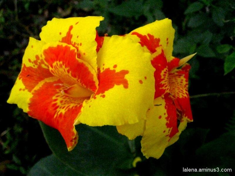 Arriba la primavera al jardí 2