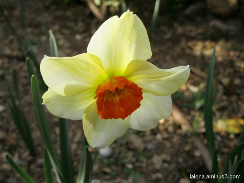 Arriba la primavera al jardí 7