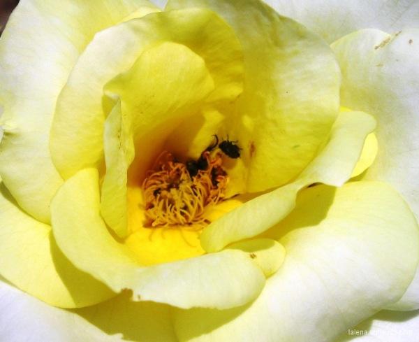 esclat en groc 3