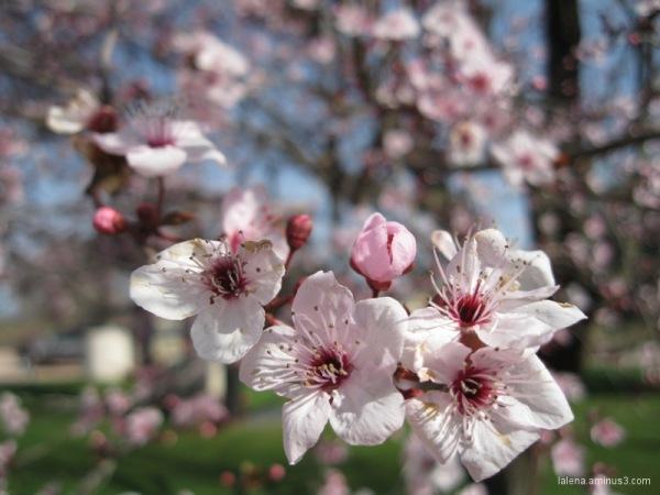 Primavera avançada 2