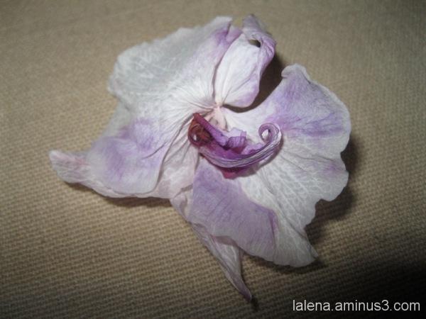 Flor morta sobre el cobrellit