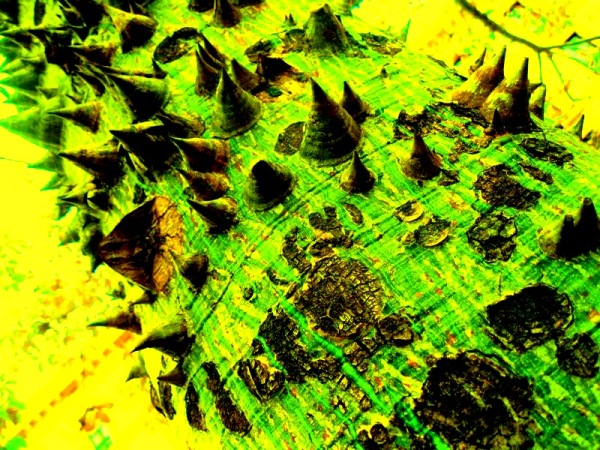 rastre verd sota punxes