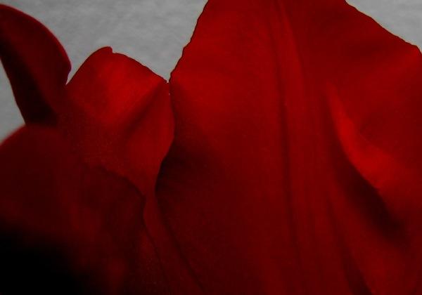 Sensualitat en roig