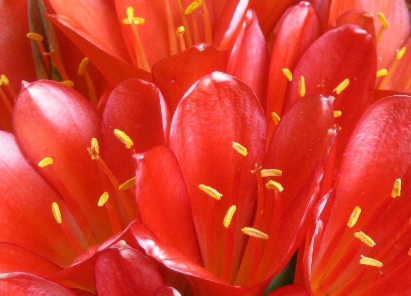 Sabatilles de dansa grogues sobre catifa vermella