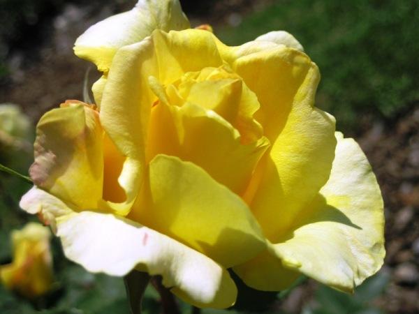 Variacions en groc 3