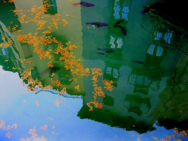Petits reflexos sobre la bassa del poble