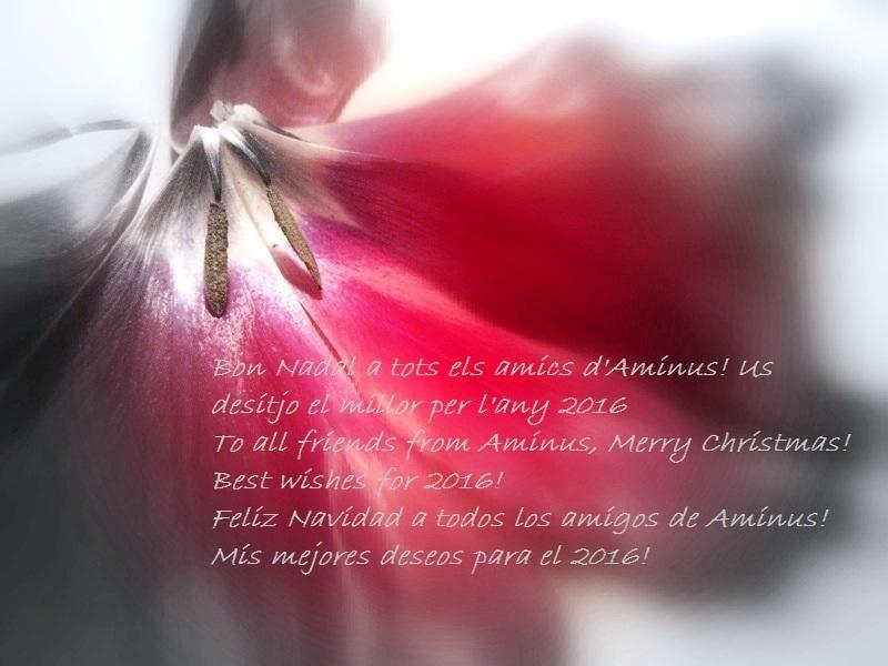 Bones Festes de Nadal!
