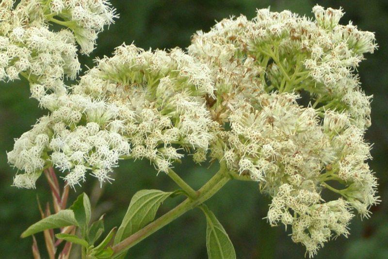 Una flor dins la lleugera boira