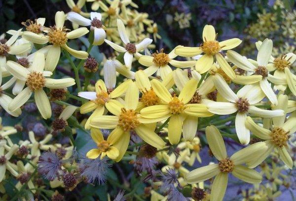 Domini en groc 8
