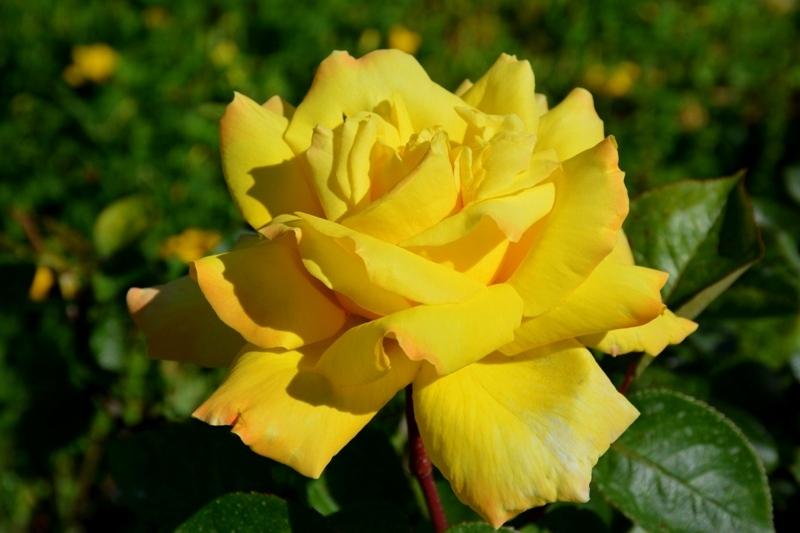 Temps de flors 3