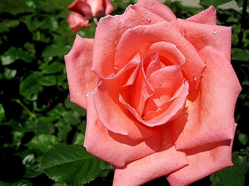 Temps de flors 4