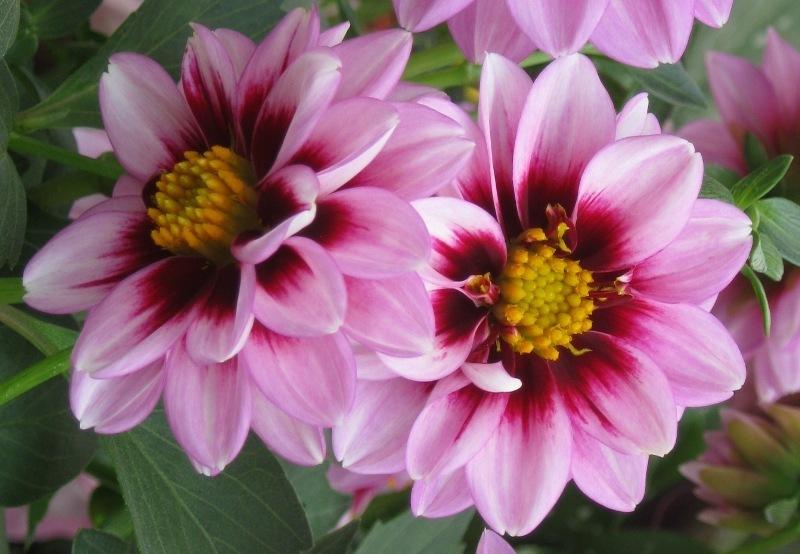 Flor de temporada 5