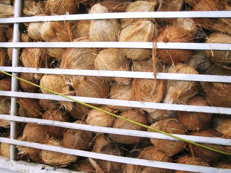 cocos empresonats