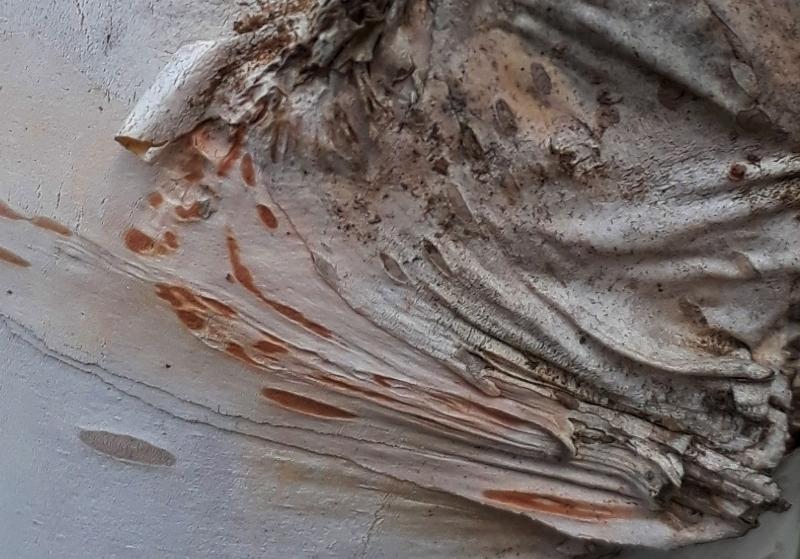 arbre amb pell de ceba