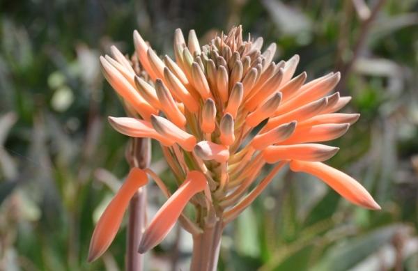 Una flor curiosa