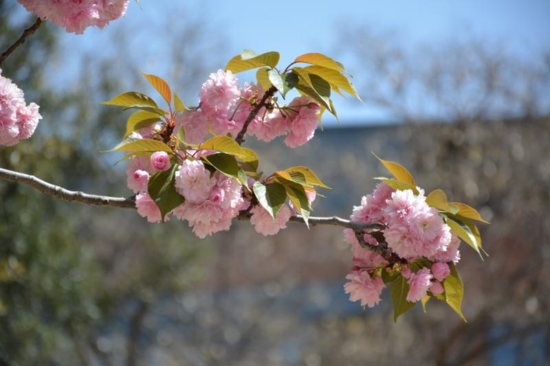 Definitivament la primavera ja ha arribat