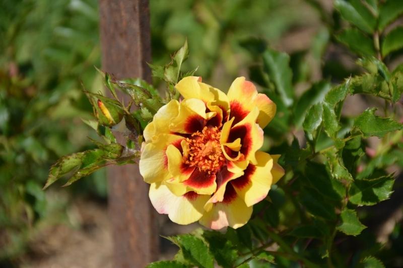 Flor del parc Cervantes