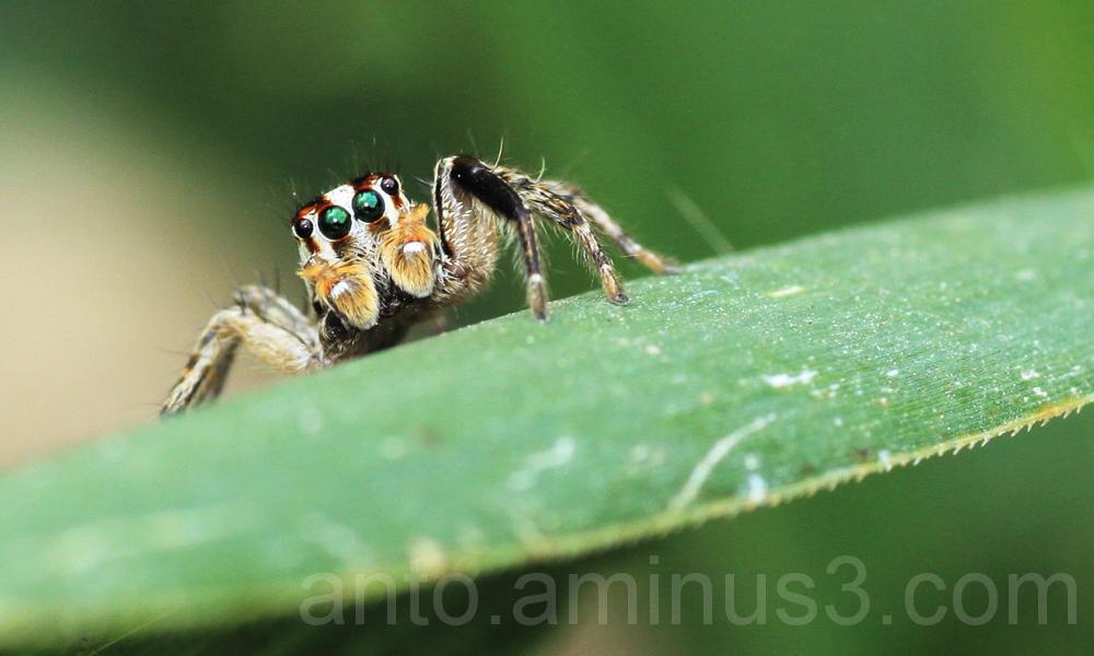 Hello Spider