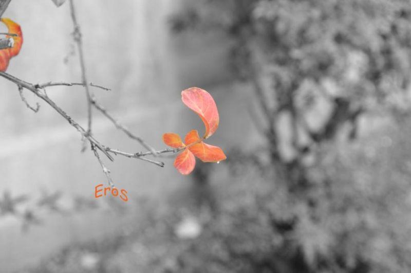 Fall 4/12