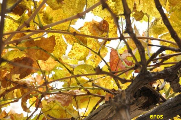 Fall 9/12