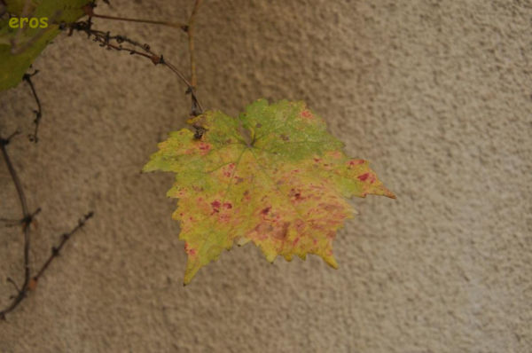 Fall 10/12