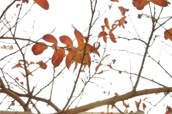 Fall 11/12