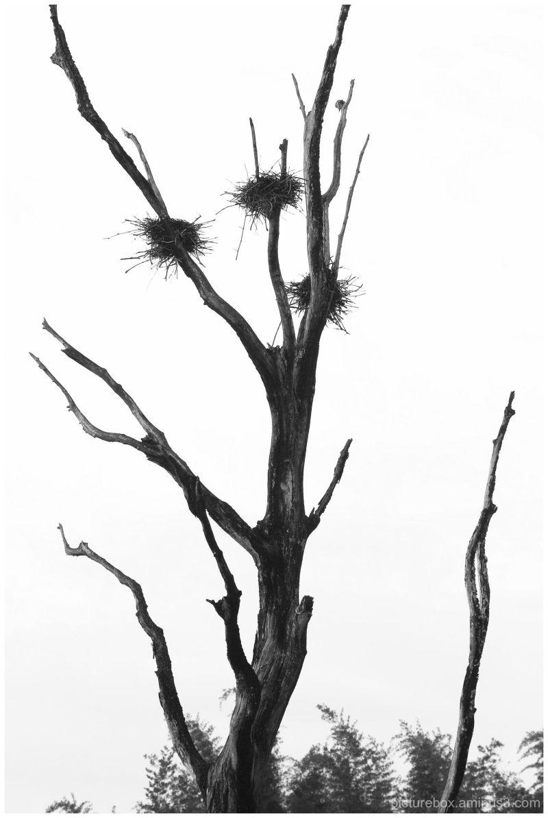 Bird nests on a tree