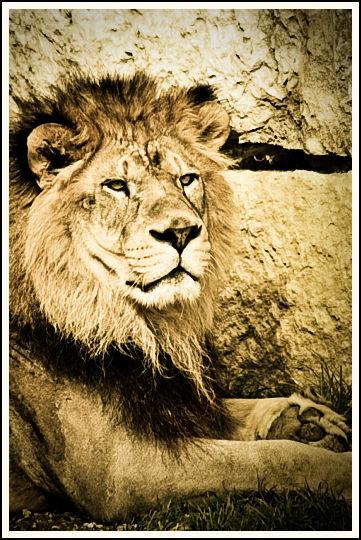 LionInLyon