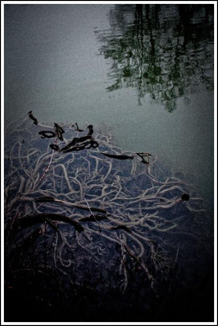 RootsUnderDarkWaters