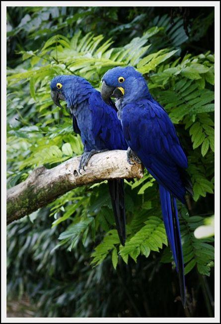 BlueGems