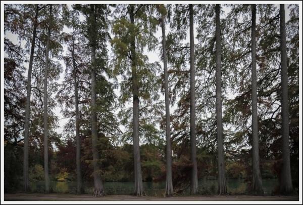 TreesLine