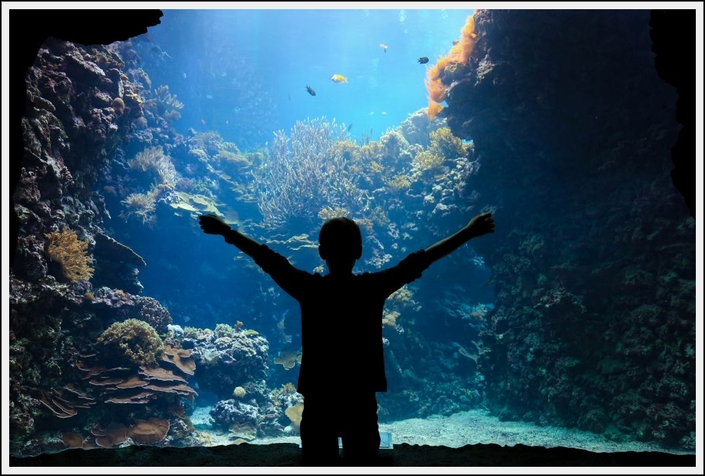 UnderwaterOrchestra