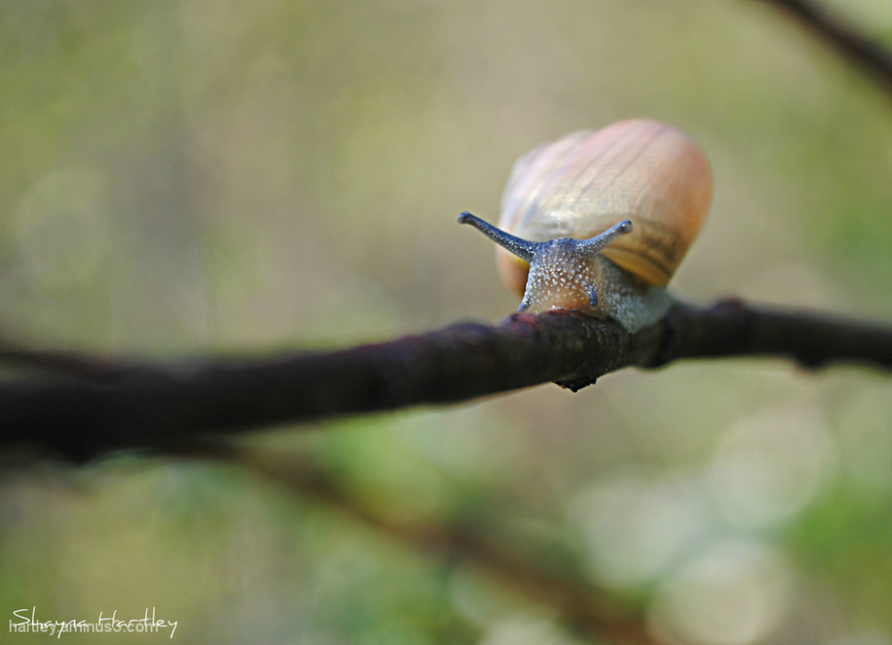 At a snail's pace..