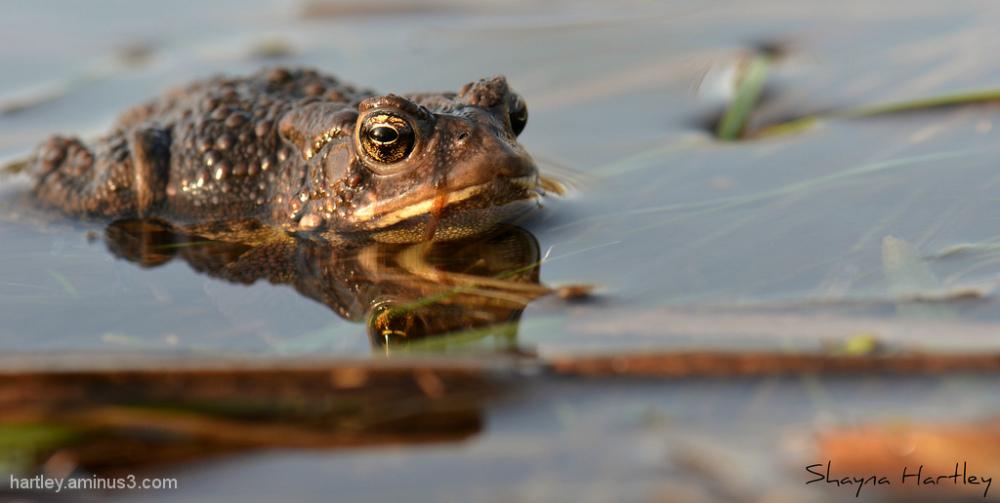 Toad Season