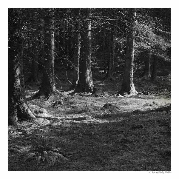 Coed Llyn y Garnedd, area of woodland North Wales