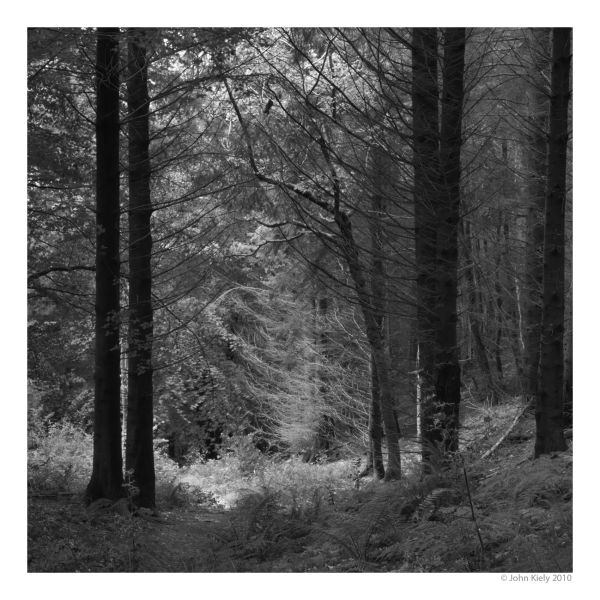 Coed Cae Fali, National Trust Woodland
