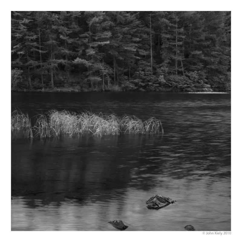 Black and whites photographs of beddgelert forest