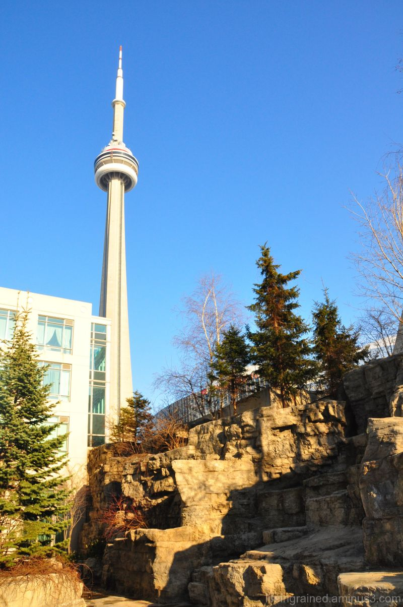CN Tower from my backyard