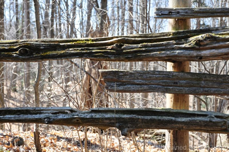 Dry woods in early Ontario spring