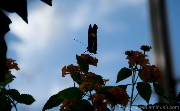 Butterfly silhoutte