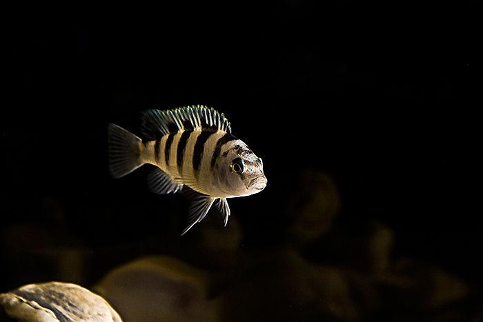 Macro Fish