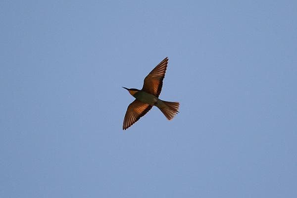 Fly my little bird, Fly