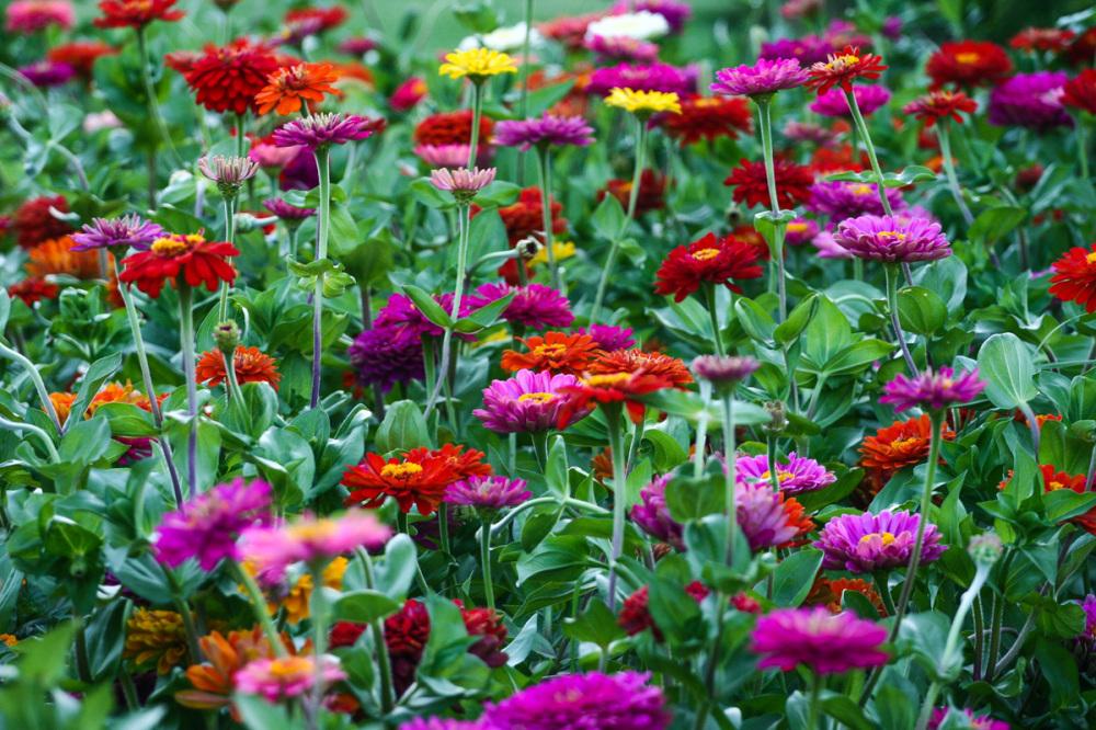 باغ گلهاي اصفهان