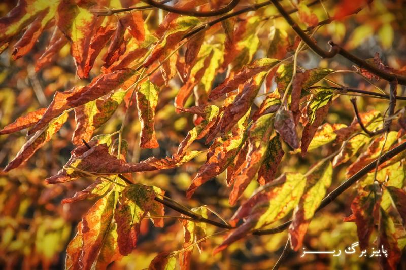 پاییز برگ ریز