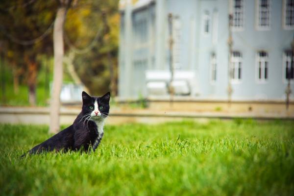 ای گربه